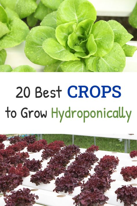 20 Best Crops to Grow Hydroponically