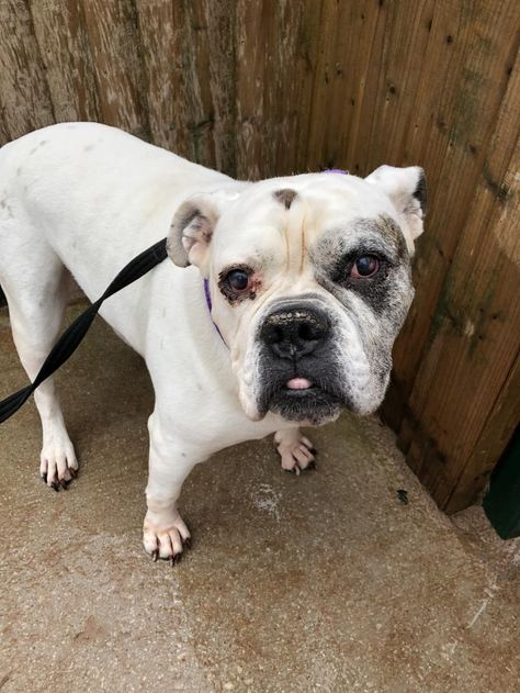 Oscar Dogs Dogs Trust Rescue Dogs
