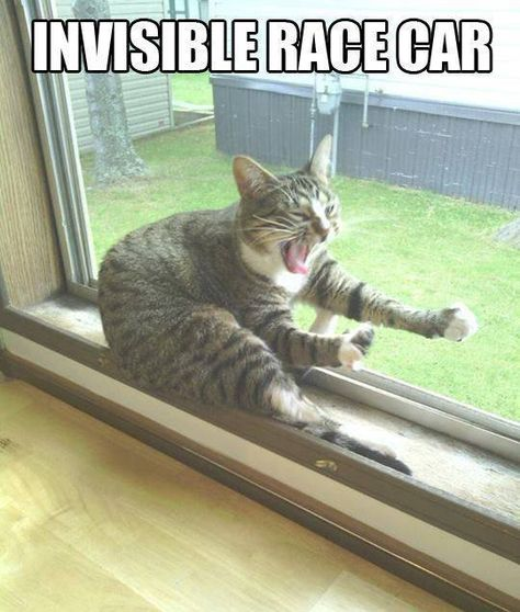 Invisible Race Car. I have no idea why I found this so hilarious, but I can't stop laughing!