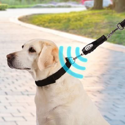 The Excitable Dog S Ultrasonic Walking Trainer Trains A Dog To