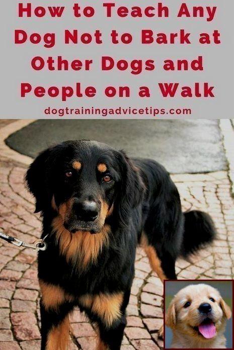 Dog Behavior Rating Scale And House Training A Puppy At Night Dog Training Obedience Dog Training Barking Dog Training