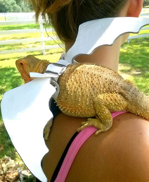 White Bearded Dragon winged harness