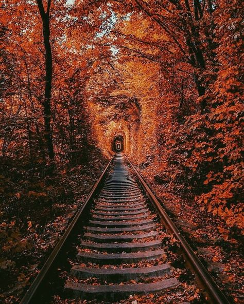 For your viewing pleasure! : Pictures - Color and black and white photographs for the pleasure of discovering nature and the world … - Autumn Photography, Landscape Photography, Autumn Aesthetic Photography, Halloween Photography, Road Photography, Autumn Cozy, Autumn Fall, Autumn Nature, Autumn Forest