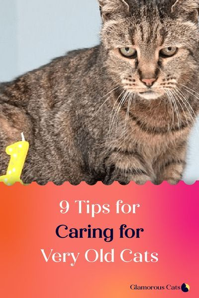 9 Tips For Caring For Very Old Cats Cats Old Cats Cat Health Remedies