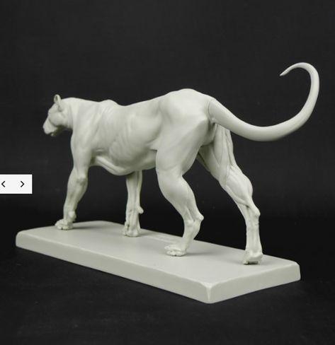Cheetah Anatomy model updated