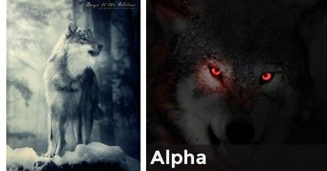 Alpha/Beta/Omega which are you? | Quiz | Omega wolf, Omega