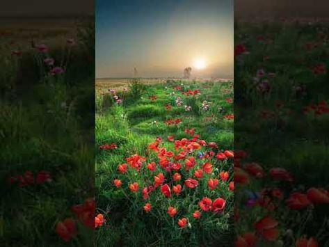 #beautiful #foryou #amazing #scenery #landscapephotography #landscape #flower - YouTube