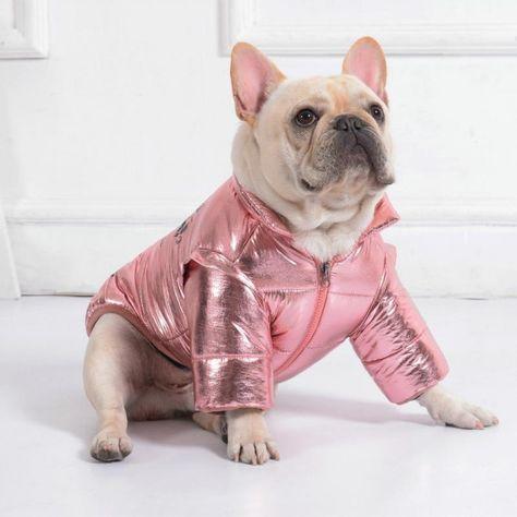 80 S Retro Shiny Jacket Dogclothing Dog Clothing French Bulldog Bulldog French Bulldog French Bulldog Puppies