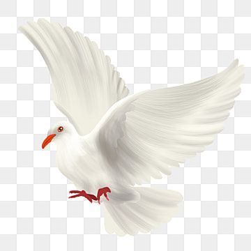Peace Pigeon Push Reef Ai White Png Transparent Clipart Image And Psd File For Free Download En 2021 Clipart Imagenes Predisenadas