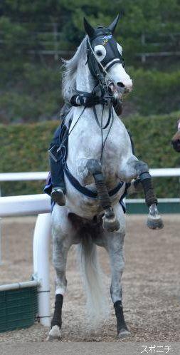 画像多数 ゴールドシップの可愛さを再確認するスレ 競馬ちゃんねる 競走馬 サラブレッド ゴールドシップ