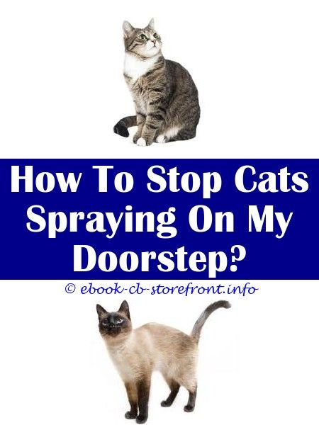 can a neutered feline even now spray