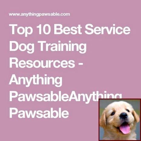 House Training A Puppy With Newspaper And Dog Training Classes Las
