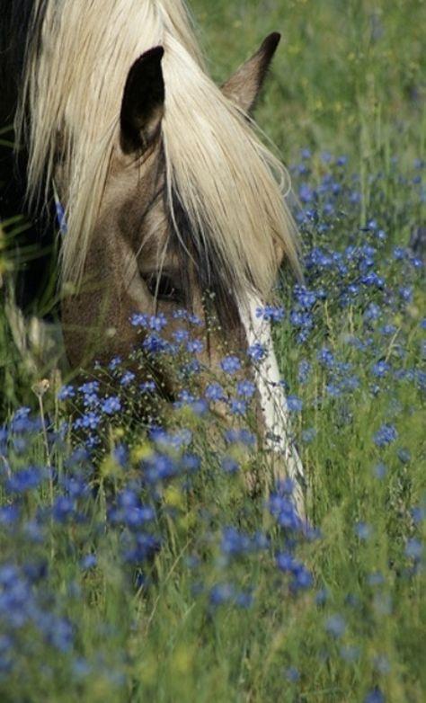 Plow-horses grazing in the meadow