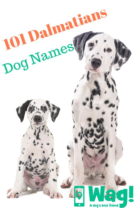 101 Dalmatians Inspired Dog Names Wag Disney Pet Names Dog