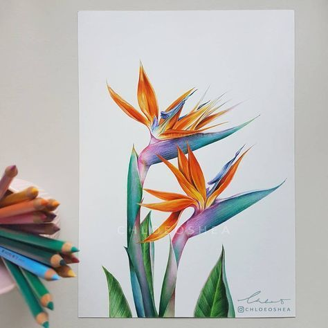 Bird Of Paradise Flower Botanical Print Strelitzia Reginae Etsy Birds Of Paradise Flower Bird Of Paradise Tattoo Bird Art Print