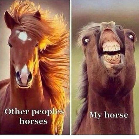 funny horse memes so true ; funny horse memes hilarious so true ; Funny Horse Memes, Funny Animal Jokes, Funny Horses, Cute Horses, Dog Memes, Cute Funny Animals, Funny Animal Pictures, Cute Baby Animals, Beautiful Horses