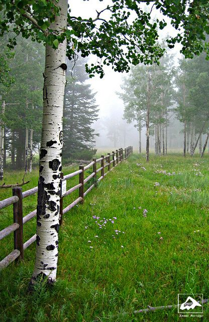Fog in the Jemez Mountains - New Mexico