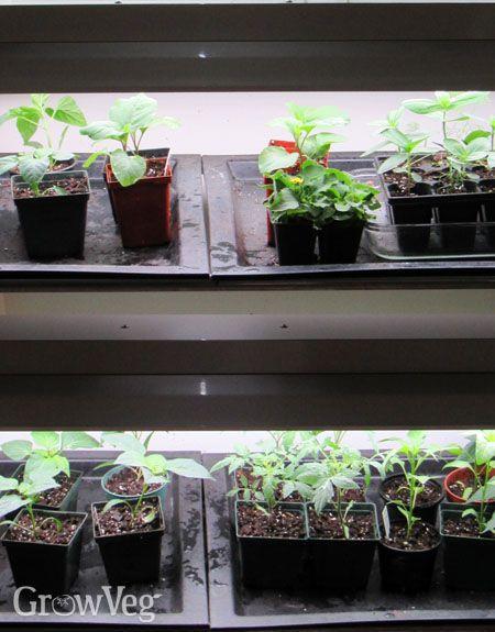 3 Shopping Tips For Plant Grow Lights Grow Lights For Plants