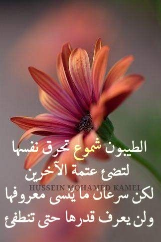 Pin By Fatima Fatim On Arabic Quotes I Love Heart Arabic Quotes Love Heart