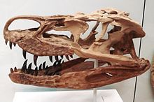 Batrachotomus