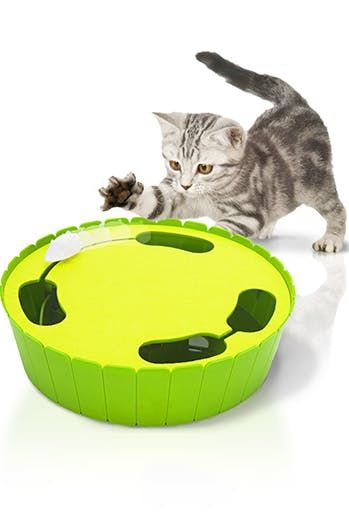 11 Pet Tech Products You Never Knew You Needed Best Interactive Cat Toys Interactive Cat Toys Pets