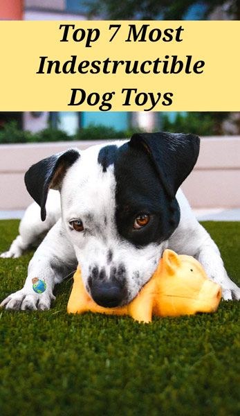 Indestructible Chew Toys For Dogs Dog Toys Durable Dog Toys