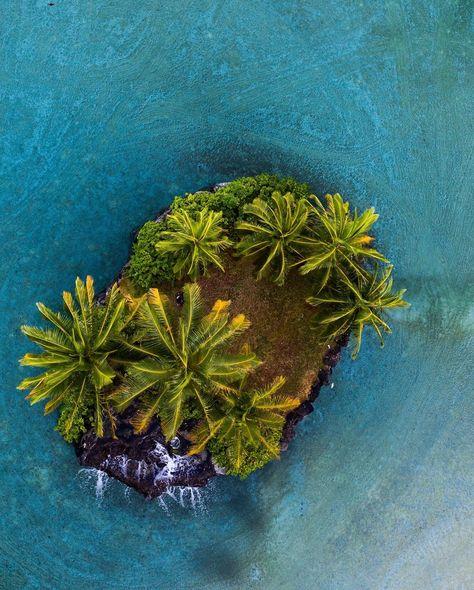 Palm Island by Jackie Fiero