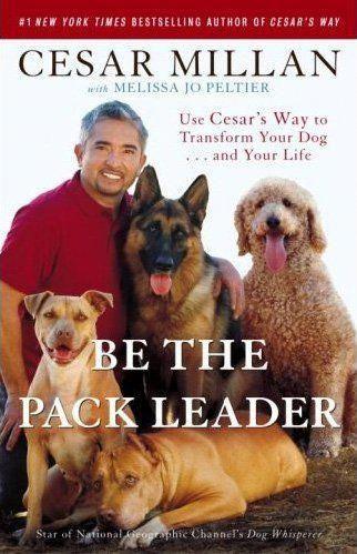 dcc16958423ffbc9c3f351e34a809662 - How To Get Cesar To Come To Your House