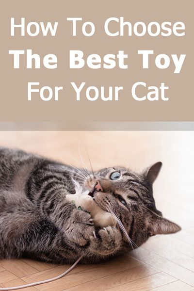How To Choose The Best Toy For Your Cat Cats Cat Care Cool Toys
