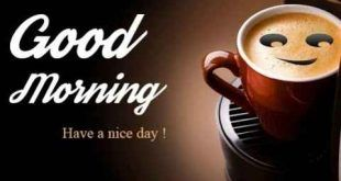 Good morning Status Videos Download Free Whatsapp, TikTok, FB And Insta  -o2Status | Good morning quotes, Good morning love, Good night greetings
