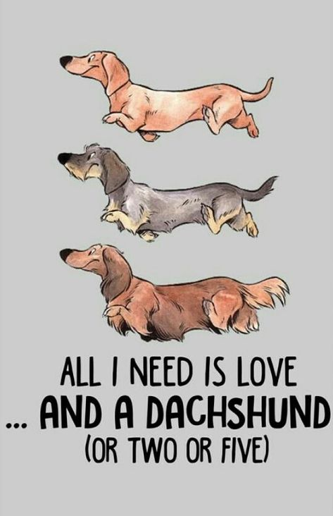Dachshund With Images Dachshund Dog Dachshund Breed