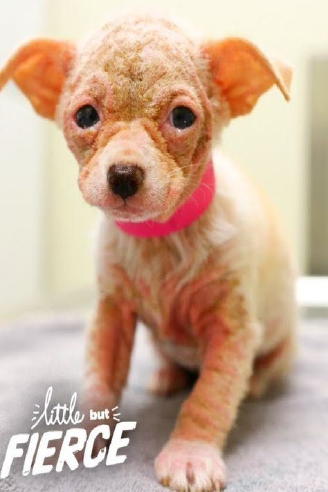 Watch Hairless Alien Puppy Grow Up To Be The Cutest Dog Cute