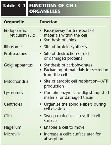 Image Result For Cell Organelles And Their Functions Chart Cytoplasm Cell Organelles Organelles Classroom Job Chart