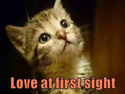 Do You Believe In Love At First Sight Friends Funny Funny Memes Funny Animal Memes