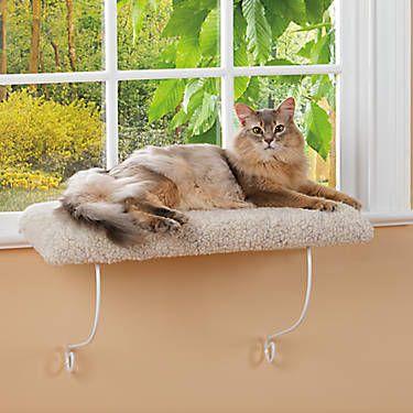 Whisker City Cozy Kitty Cushioned Window Perch Cat Window Perches Petsmart Cat Bed Cat Window Perch Kitten Beds