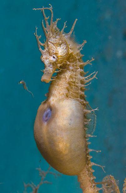 184 best Future Dream Job (Marine Biology) images on Pinterest - marine biologist job description