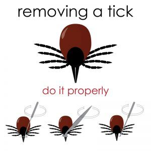 How To Get Rid Of Ticks On Dogs Ticks On Dogs Get Rid Of Ticks