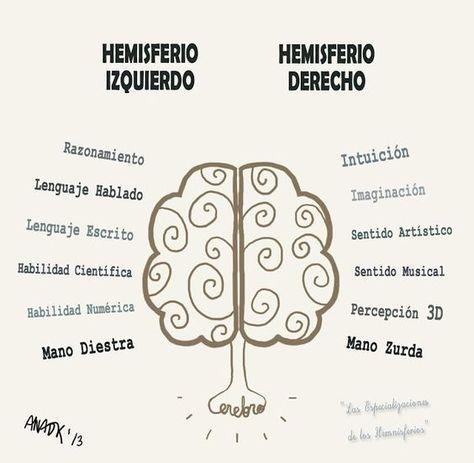 ¿Y tú, qué hemisferio trabajas más?Conoce los 10 ejemplos de mapas mentales más creativos aquí: http://tugimnasiacerebral.com/mapas-conceptuales-y-mentales/ejemplos-de-mapas-mentales-creativos.Te ayudará a estimular el hemisferio derecho de tu cerebro, encargado de procesar las actividades creativas. También te servirá como fuente de inspiración al momento de realizar tu primer mapa mental. #cerebro #mapas #mentales #creatividad #ejemplos