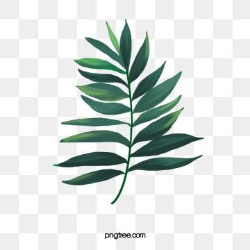 Watercolor Leaves Png Images Vector And Psd Files Free Download On Pngtree Cat Air Latar Belakang Ilustrasi