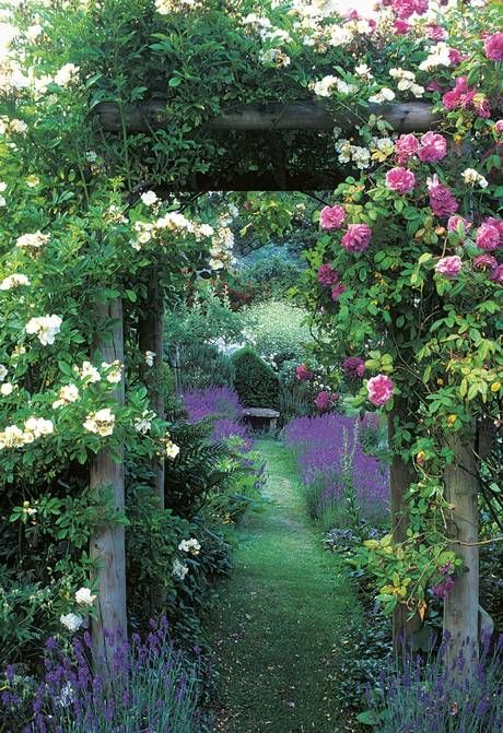 Roses and Lavender. Repinned by www.claudiadeyongdesigns.com and at www.thegardenspot.co.uk