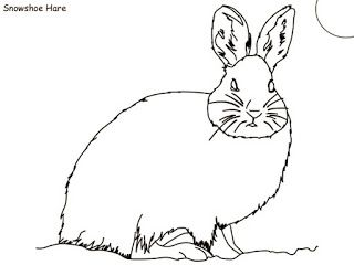 Arctic Tundra Coloring Pages Coloring Pages Arctic Tundra