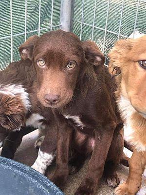 Springfield Va Spaniel Unknown Type Meet Belle A Pet For Adoption Pet Adoption Dog Adoption Pets