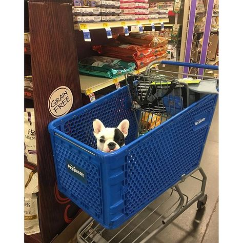 Need To Make A Petsmart Run Shop Online Or Take Your Pet With You To The Store Photo Credit Thefamoushamilton Pet Accessories Online Pet Supplies Pets