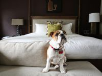 Hotels That Take Dogs Http Pets Ok