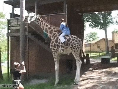 Best GIFs Of All Time Of The Week Gifs And Funny Stuff - The 21 best animal selfies of all time