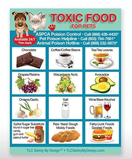 Toxic Foods Poison For Pets Dogs Cats Emergency Ice Home Alone Refrigerator Magnet Review Dangerous Foods For Dogs Dog Food Recipes Foods Dogs Can Eat