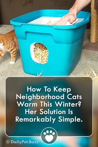 How To Keep Neighborhood Cats Warm This Winter Her Solution Is Remarkably Simple Cats Cat A Outdoor Cat House Outdoor Cat Shelter Cat House Outdoor Winter