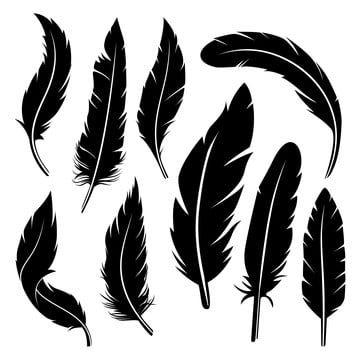 Detailed Feather Black Silhouette Vector Design Feather Clipart Feather Icons Black Icons Png And Vector With Transparent Background For Free Download Silhouette Vector Black Silhouette Feather Icon