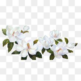 As Flores Brancas De Folhas Verdes Flower Illustration Flower Clipart Png Flower Clipart