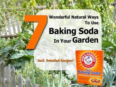 7 Wonderful Natural Ways To Use Baking Soda In Your Garden